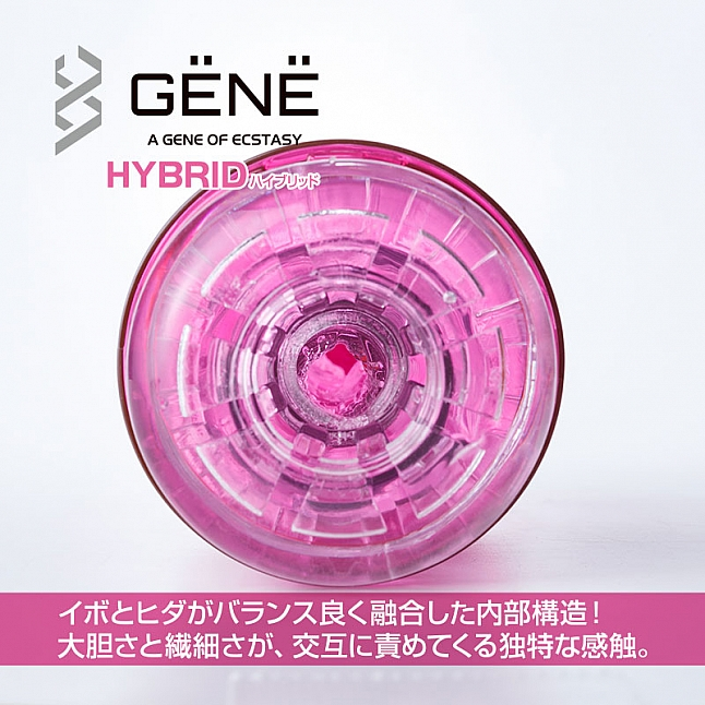 Fuji World - GENE Masturbator Cups